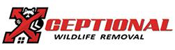 Erlanger Wildlife Removal